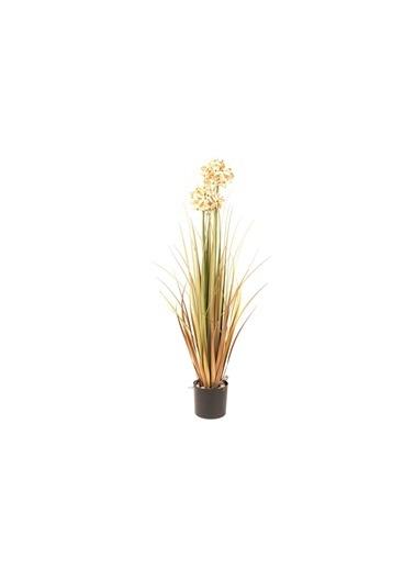 Mikasa Moor Kuru Çiçek Bej